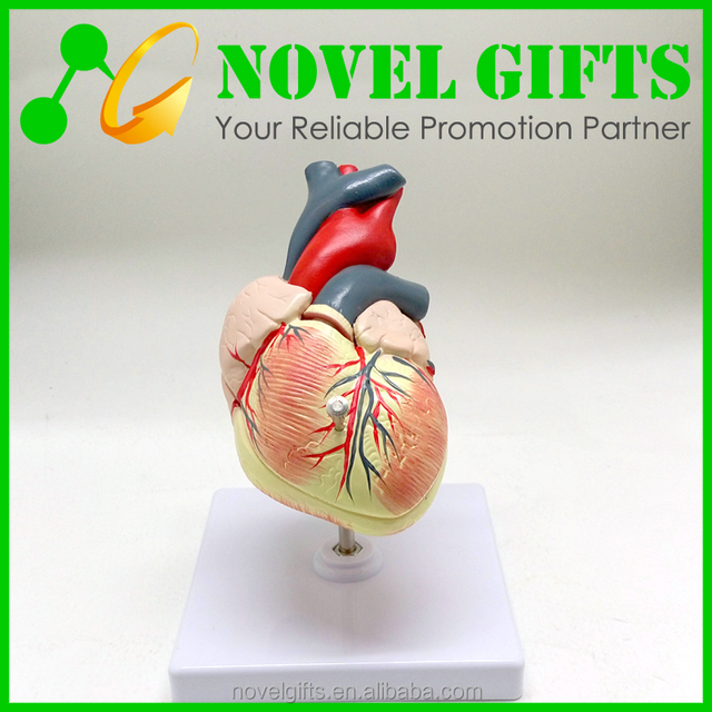 Buy Cheap China heart model anatomy Products, Find China heart model ...