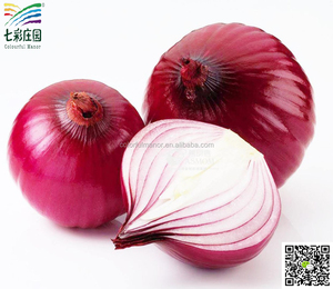Fresh yellow onions / fresh onion export to dubai