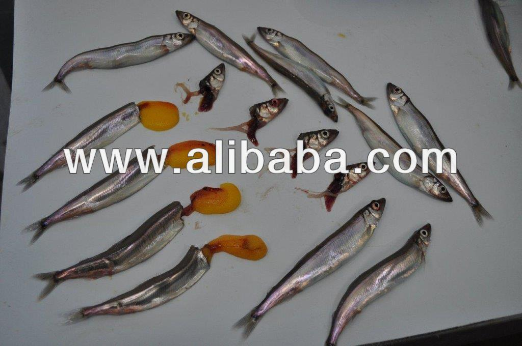 Black Capelin Fish | Female Capelin Female Capelin Suppliers And Manufacturers At