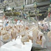 /product-detail/1000bph-poultry-processing-equipment-chicken-slaughtering-equipment-plant-60482666720.html
