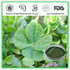 Superior Quality Red Clover Extract_Formononetin_485-72-3