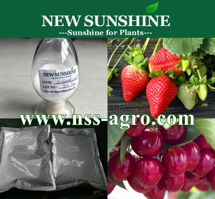High quality Plant growth hormone 90% TC Gibberellic acid