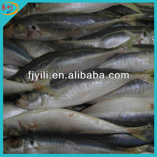 Whole round frozen horse mackerel price