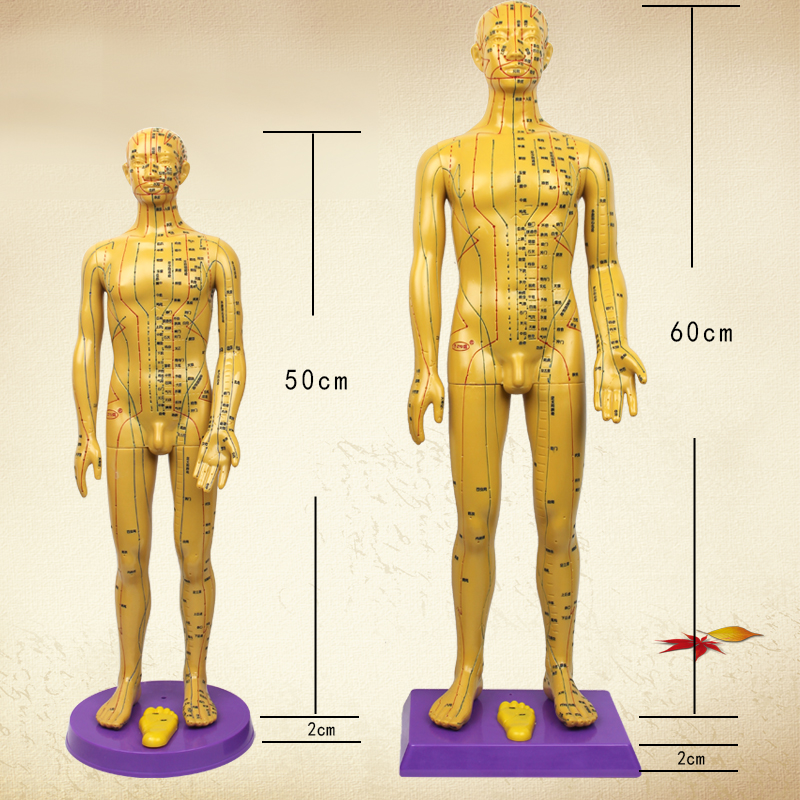 Acupuncture Human Body Model, Acupuncture Human Body Model Suppliers ...