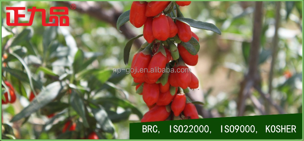 Beauty and Health Healthy Food Dried Goji Berriess Lycium Barbarum Herbal <strong>Fruit</strong> Goji berry