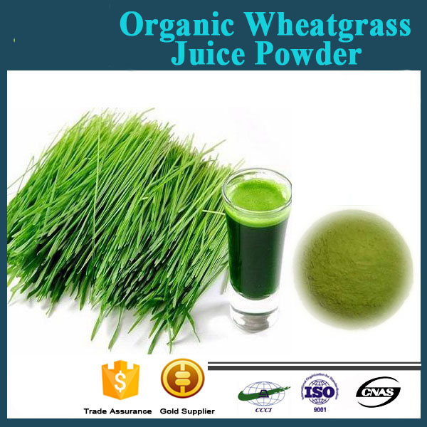 Factory Free Sample 100% Natural Organic Wheatgrass Juice Powder ...