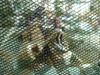 malaysia camouflage net/military netting,(free sample to you),camouflage net 6*6,wholesale military surplus