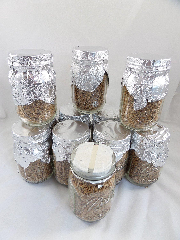 Buy Rye Berry Grain Mushroom Substrate Pint Size Jar * 12