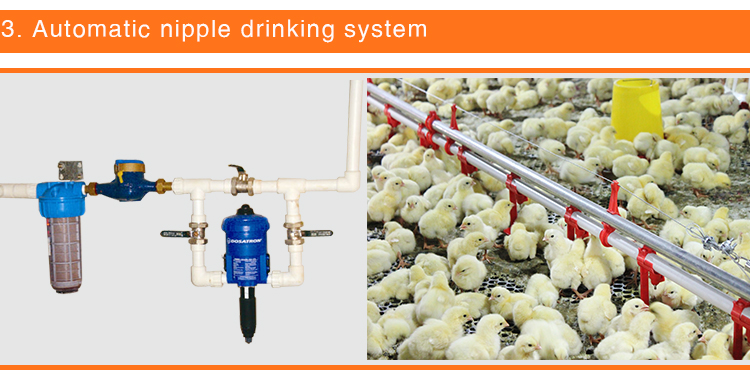 Goldenest automatic chicken shed farm equipment poultry farming equipment for broiler birds JCJ01-FL10