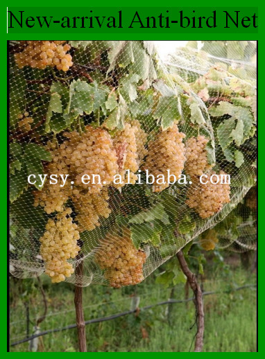 Extruded Plastic Garden Bird Netting Fruit Tree Bird Wire Mesh