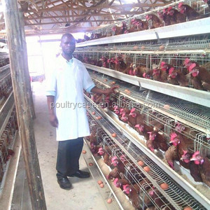 Industrial Cheap Laying Pyramid Style Chicken Coops Sale On Alibaba