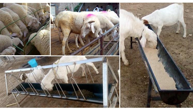 Livestock Farm Durable Plastic Cattle Feed Trough Buy