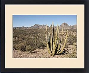 Framed Print of Cardon cactus, near Loreto, Baja California, Mexico, North America