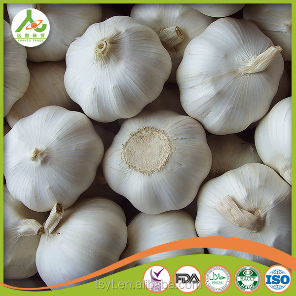 2016 Year Pizhou garlic ,best quality garlic in China fresh private label natural garlic exporter manufacture