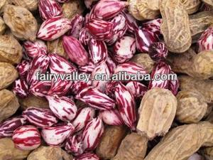 Growing/Planting High Yield Heirloom Red/Pink/Colorful/White/Black Peanuts Seeds