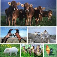 Doramectin 117704-25-3 Anti-parasitic Veterinary medicine farms Poultry antibiotics