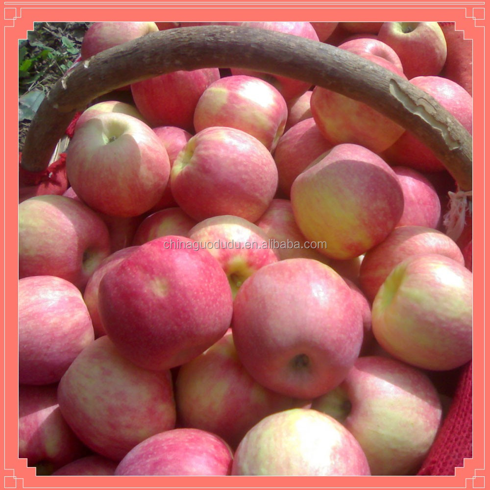 From China Sweet fresh HUAGUAN apple fruit BY HAND