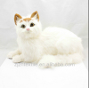 Cat Plush (Cream) cute & realistic