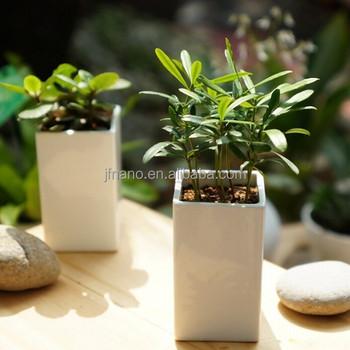 3 Inch Small Rectangular White Ceramic Indoor Decorative Pots Planters -  Buy Indoor Decorative Pots Planters,Ceramic Indoor Decorative  Planters,Small
