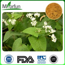 Health Food 30% buckwheat flavone tartary buckwheat extract powder 10:1 with A Discount
