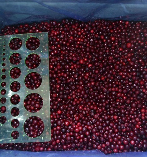 High Quality best selling sweet wild frozen lingonberry on sale
