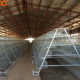 Poultry farm hot/cold dip galvanized layer chicken cages for sale