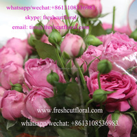 With Cheapest Price Offer Fresh Cut Bulk Flowers With Cheapest Price From Yunnan Flower Farm For Gifts Available All Seasons