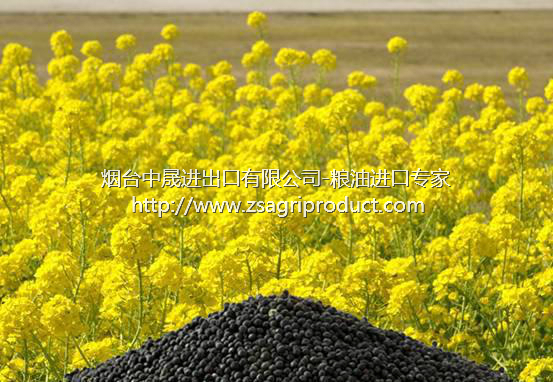 rapeseed for sale