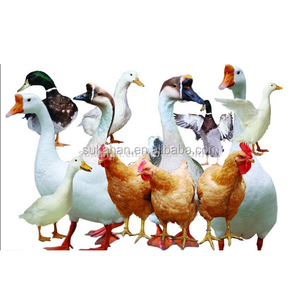 Poultry Feed Additives Manufacturers In India