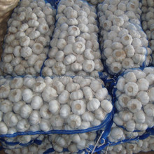 4.5cm up normal white garlic wholesale price for export