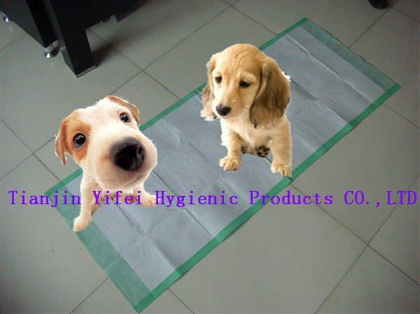 disposable pet training pads for your pets