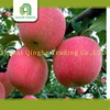 chinese fresh apple green smith apple fresh sweet red apples