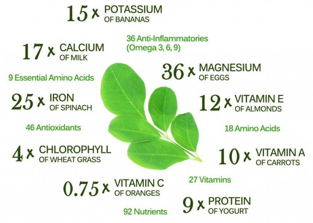 High Quality Health Benefits Moringa Powder Leaf/moringa Leaf Powder Price  - Buy Moringa Powder Leaf,Moringa Leaf Powder Price,Health Benefits Moringa