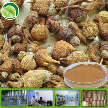 GMP factory supply high quality maca extract 20:1