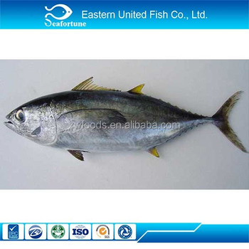 China seafood yellowfin tuna head buy yellowfin tuna for Tuna fish price
