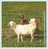 High Tensile goat fence roll cattle fence designs Field Fence