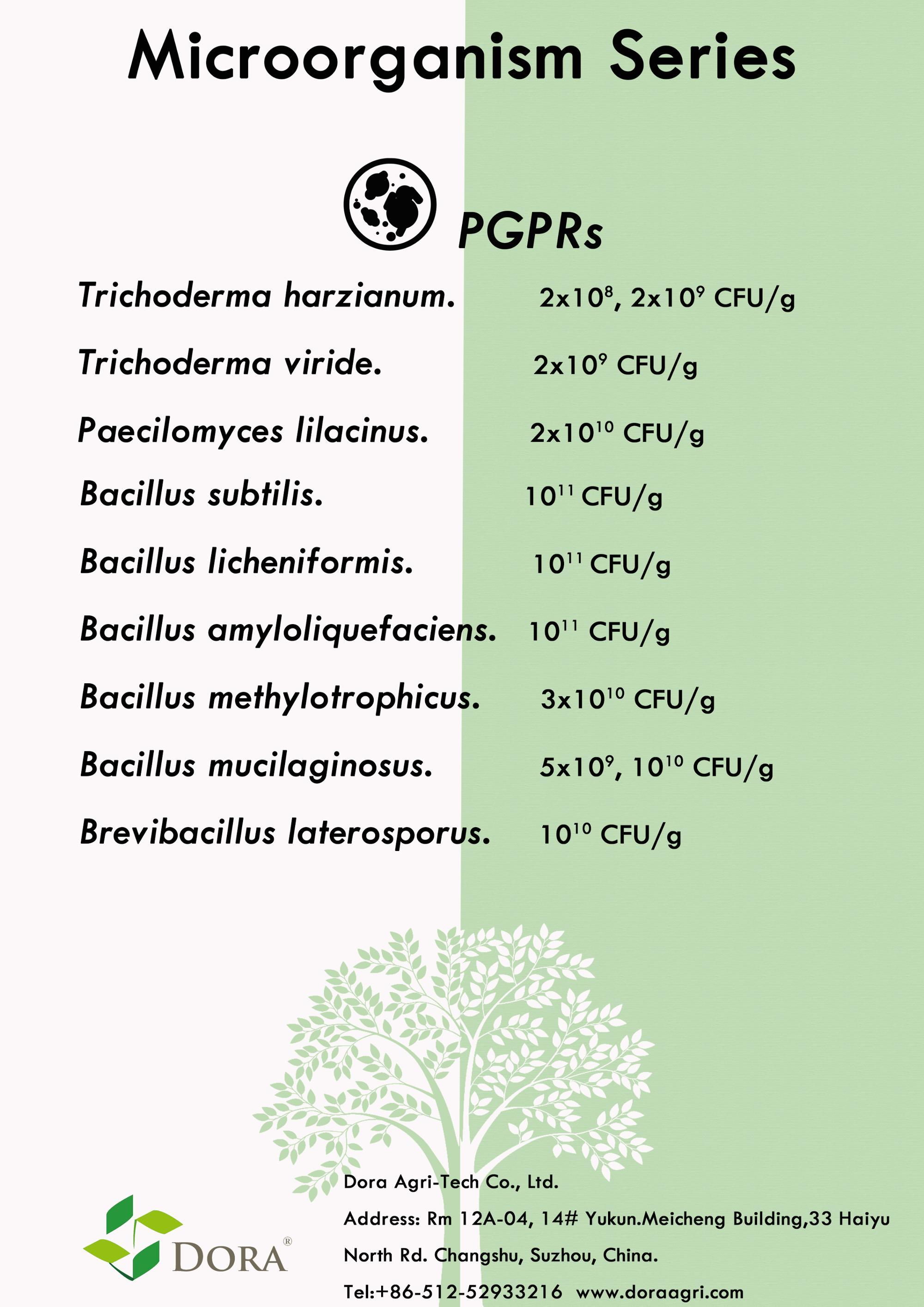 مفيد الحيوي الأخضر الأسمدة البوتاسيوم البكتيريا العصوية Mucilaginosus (BM) لتعزيز نمو النبات