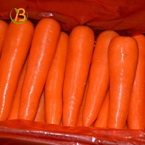 Chinese Fresh Carrot Shandong Price vietnam fresh carrot mega a indian red carrot fresh for bangladesh