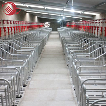 Hogs Gestation / Pig Production Crate / Breeding Crate