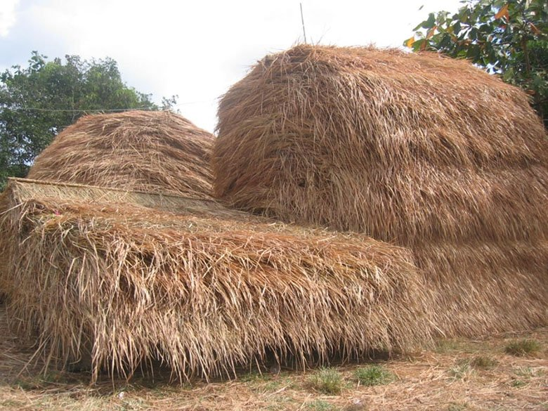 Thatched Roof   Buy Thatched Dry Grass Roof Product On Alibaba.com