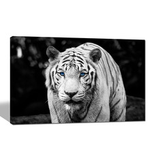 White Tiger Poster/black and White Animal Canvas Wall Art/contemporary Canvas Print Framed