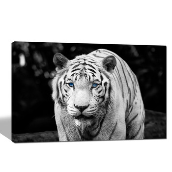 Tigre Blanco Cartel Animal Blanco Y Negro Lienzo Arte De La Pared ...