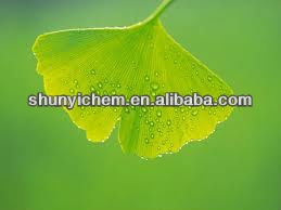 high quality Ginkgo Bilota Extract