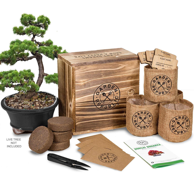 Get Quotations · Bonsai Tree Seed Starter Kit - Mini Bonsai Plant Growing Kit, 4 Types of Seeds