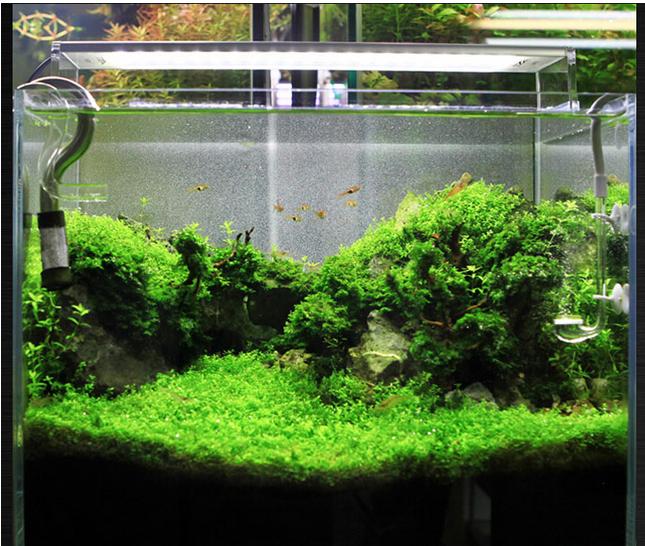 Professional Led Aquarium Light For Plant Tank,Super White Led ...