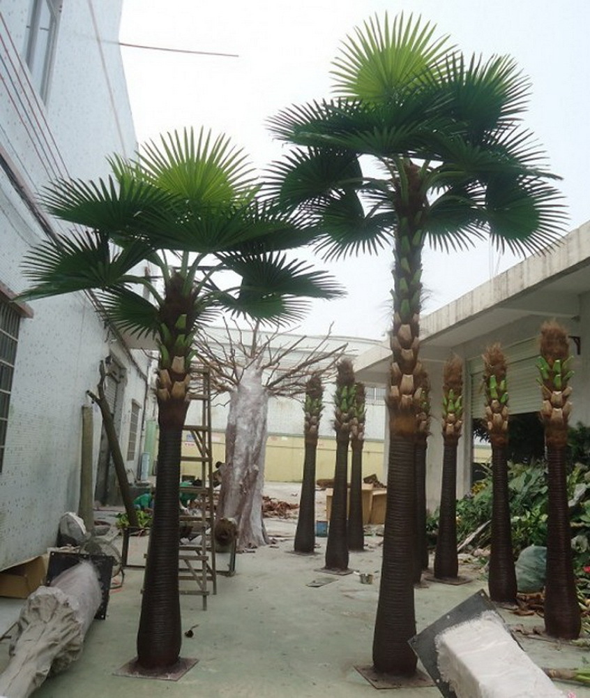 Best Indoor Palm Trees For Sale Gallery - Interior Design Ideas ...