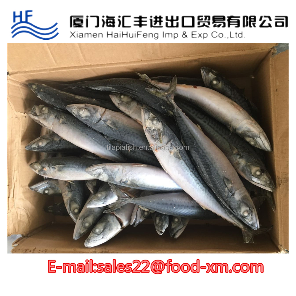 Ocean Food Farming Raised Seafood Available Size Frozen Mackerel