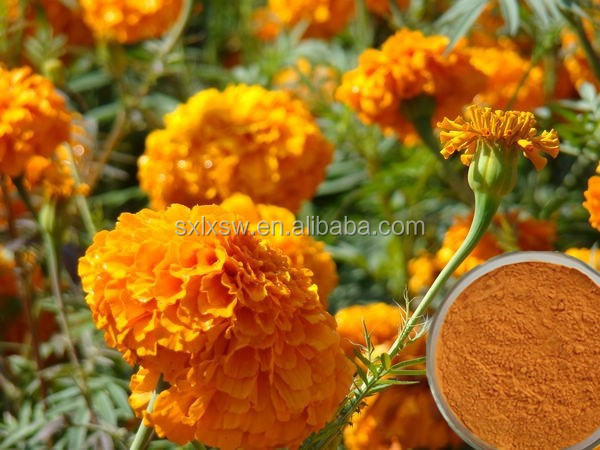 marigold flower extract lutein 5% 90%, zeaxanthin 5% 20% extract powder/lutein capsules tablets