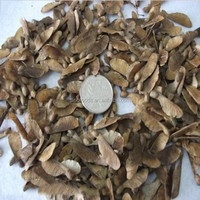 Qing Feng China Supplier Green Maple Outdoors Tree Seeds Bulk