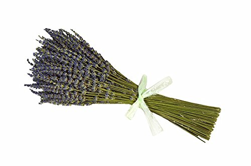 XWXS 1 Bunch French Dried Lavender Flowers Bunch, Fragrant long 28cm-32cm (0.1kg)